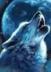 Kinwolf